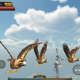Bird Simulator APK Download Latest Version For Android